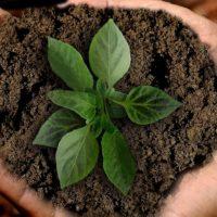 Quel bon prix pour de la terre végétale ?