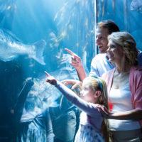 L'aquarium de Paris : des infos utiles