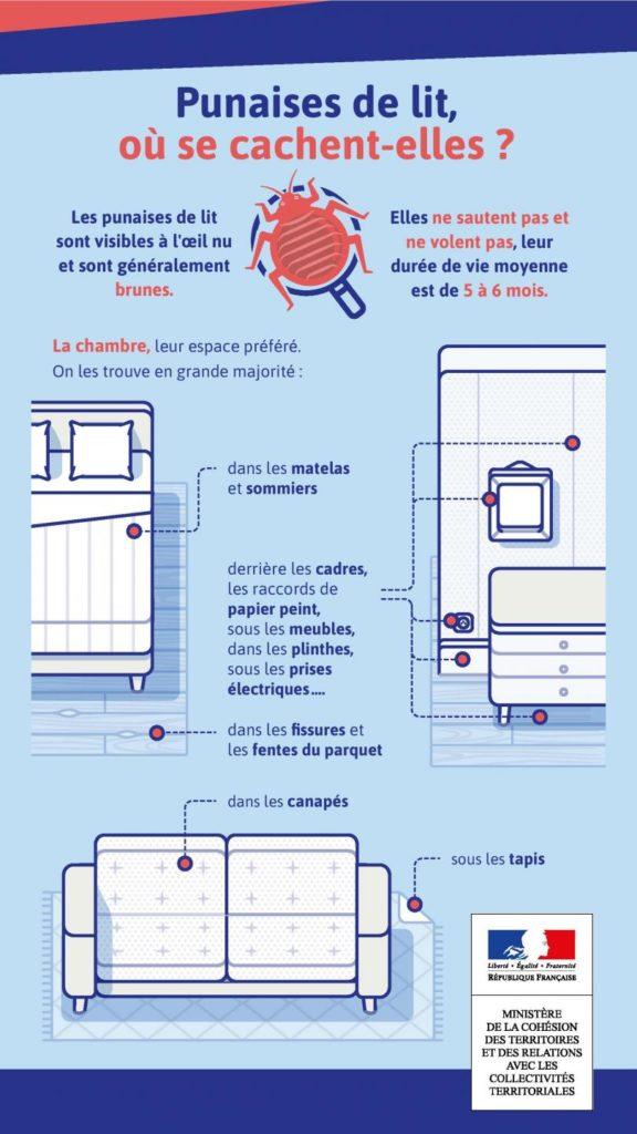 infographie-punaise-lit